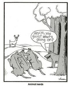 """Gary Larson wrote """"Dammit Moon Moon"""" before it was cool."""