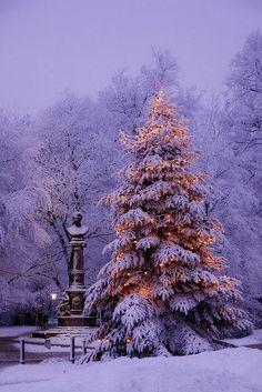 Lovely Holiday Scene