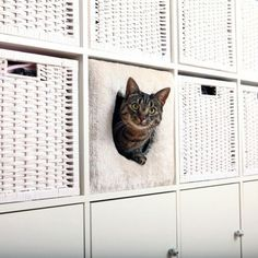 Katzenhöhle für IKEA-Regale Kallax oder Expedit #catsdiyikea
