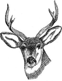 Deer head drawing art