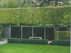 Fascinating Evergreen Pleached Trees for Outdoor Landscaping 31 - Garten - Outdoor Backyard Fences, Garden Fencing, Outdoor Landscaping, Hedges Landscaping, Landscaping Ideas, Back Gardens, Small Gardens, Outdoor Gardens, Garden Hedges