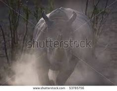 Image result for rhinos in a cloud of dust