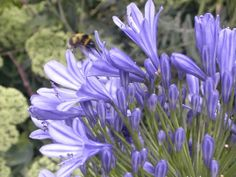 Insects and pollination make our gardens