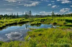 Canaan Valley National Wildlife Refuge in West Virginia by Frank Ceravalo