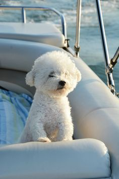 Weekend Waterview: Boating with Dogs | ©homeiswheretheboatis.net #LKN #pontoon #BichonFrise