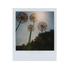 poloroid ❤ liked on Polyvore featuring fillers, backgrounds, pics and polaroid