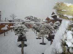 Another snowy bonsai garden Bonsai Garden, Winter Garden, Ikebana, Snow, Outdoor, Pots, Gardens, Ideas, Outdoors