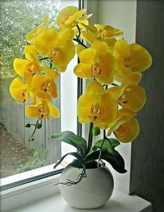 Garden Flowers - Annuals Or Perennials Orchids Orchid Flower Arrangements, Beautiful Flower Arrangements, Orchid Plants, Flower Vases, Exotic Flowers, Tropical Flowers, Yellow Flowers, Beautiful Flowers, Orquideas Cymbidium