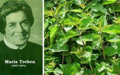 Toate părțile acestei plante sunt comestibile și utile în medicina naturiste: rădăcina, tulpinile, frunzele, florile și semințele.Terapeuta austriacă Maria Treben spune într-una din cărțile ei că de când a descoperit puterea tămăduitoare a urzicilor, Fitness Diet, Health Fitness, Natural Health Remedies, Herbs, Plants, Pandora, Remedies, The Body, Herb
