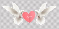 Love design concept with two white pigeons holding heart in its beak on transparent background realistic vector illustration , Pink Pigeon, White Pigeon, Valentines Day Doodles, Valentines Day Background, Wings Sketch, Occult Tattoo, Feather Texture, Wedding Icon, Valentine Cupid