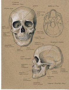 Image result for science sketchbook