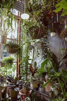 Room With Plants, House Plants Decor, Plant Rooms, Hanging Plants, Indoor Plants, Indoor Plant Wall, Plant Aesthetic, Bathroom Plants, Garden Bathroom