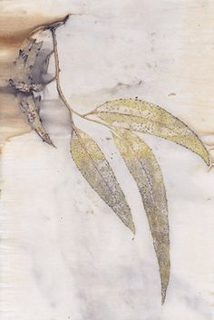 Eco Prints by Cecilia Sharpley,  Duckpond Press. The colour is derived from the leaves themselves, combined with a mordant to bond with the substrate.