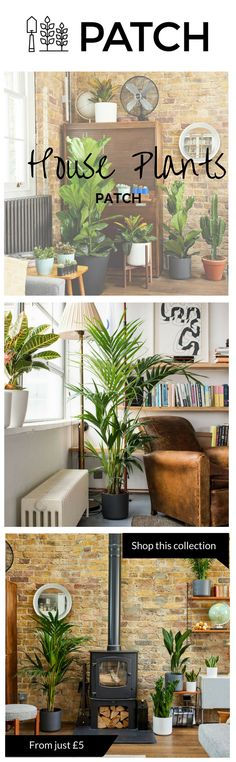 The best house plants for the living room. Through a range of shades and shapes this collection of indoor plants and pots/planters will work wonders to bring some life to your living room.    Whether inside or outside your home or office, Patch helps you choose the best plants for you, delivers them to your door and helps you look after them.  Follow @HelloPatch on Instagram for urban gardening and indoor plant/houseplant or gardening inspiration!