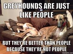 I don't think greyhounds would breed people to race and then put down the people who weren't fast enough....so, yeah, I think they're way better than people!