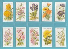 english garden flowers - Google Search Kew Gardens, Old English, Flower Cards, Fall Crafts, Crafty, Flowers, Image, Art Ideas, Events