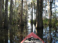 Darien, GA: Beautiful vegetation and trees -- cypress, tupelo, wild rice