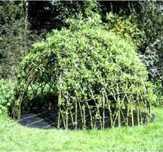 How To Make A Willow Den  http://homestead-and-survival.com/how-to-make-a-willow-den/