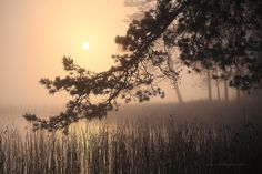 Sunrise through the morning mist by a lake. Swedish autumn at its best... cool mornings developing into crisp, sunny Days.