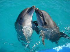 Dolphins torture their prey. | 14 Terrifying Facts About Otherwise Adorable Animals
