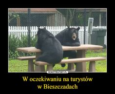 W oczekiwaniu na turystóww Bieszczadach – Black Bear, Science And Nature, Good Mood, Best Memes, Nice View, The Funny, Animals And Pets, I Am Awesome, Funny Pictures