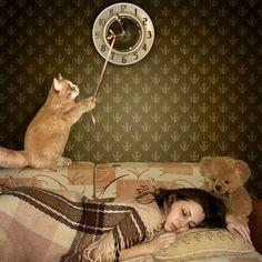 Criativos, Relógio, Gato, Urso de pelúcia, Castanhos, Dorme, Meninas, Animais