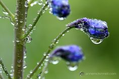 Flowers and water drops by Anne McKinnell  Use a shallow depth of field-  Shallow depth of field is when only part of the image is sharp and the rest is soft and out-of-focus. You can achieve this by using a wide aperture (low aperture number) such as f/4 or f/2.8. The effect is even more pronounced if you are using a telephoto lens with a wide aperture.