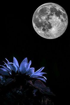 blue flower's loving