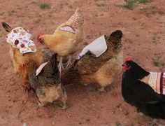 Chicken Saddles