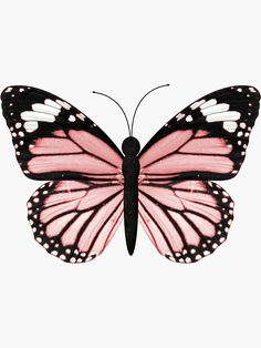 Butterfly Drawing, Butterfly Painting, Pink Butterfly, Butterfly Wings, Butterfly Wallpaper Iphone, Iphone Wallpaper, Freundin Tattoos, Afrique Art, Butterfly Pictures