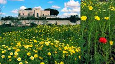 A typical #masseria in #Salento immersed in greenery