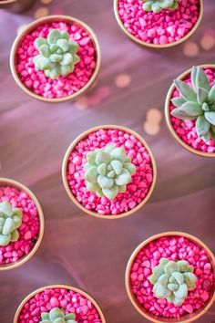Succulents are a sweet, low-maintenance gift mom will enjoy with no fuss or upkeep. Planting pint-sized succulents in a bed of hot pink rocks is a bright contrast!
