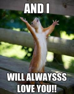 Laugh Out Loud With These Funny Squirrel Memes - I Can Has Cheezburger? Gym Memes, Gym Humor, Workout Humor, Ohio Memes, Yoga Humor, Squirrel Memes, Cute Squirrel, Squirrels, Happy Squirrel