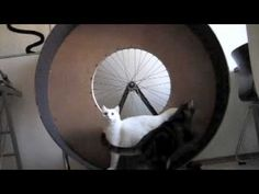 "BICYCLE WHEEL MOUNTED DIY :: :: ""cat wheel prototype minka & snowy"""