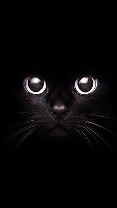 Black Cat 720 x 1280 Wallpapers disponible para su descarga gratuita.: