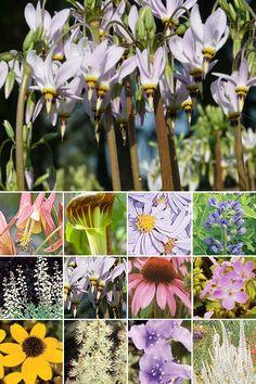 40 Plant Woodland Semi-Shade Garden (Medium Soils in Light to Moderate Shade)