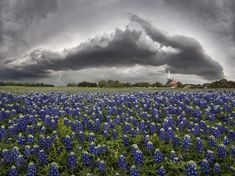 WHERE TO SEE THE BEST BLUEBONNETS IN 2017 ***Thunderstorm approaching Palm Valley Lutheran Church in Round Rock.Image credit : Jason Weingart