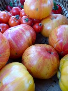 Best tomatoes from seed: Copia heirloom, red, yellow bicolor, juicy and meaty.