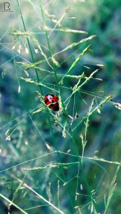 Ladybird Beetle by Renjith Vijay on 500px