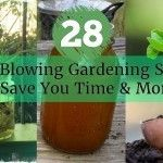 28 Mind Blowing Gardening Secrets To Save You Time & Money
