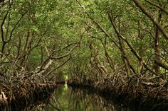 Mangrove Tour, Roatán, Honduras. Contact West Bay Tours to plan your next adventure. http://www.westbaytours.com/