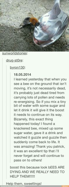 Aww, reminds me of the time I saw a drunk bee. The More You Know, Good To Know, Geeks, Tumblr Stuff, Save The Bees, Thats The Way, Faith In Humanity, Lifehacks, Things To Know