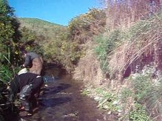 nice day nice river