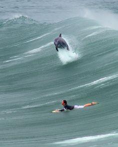 for my dolphin loving surfer girl daughter