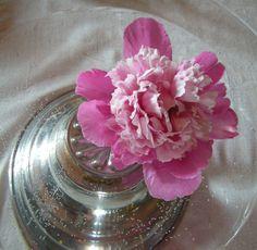 Hagens eldste og vakreste pion Vase, Garden, Pictures, Home Decor, Photos, Garten, Lawn And Garden, Interior Design, Vases
