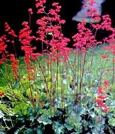 Flower Garden Ideas Illinois stone garden edging ideas … | backyards | pinterest | gardens