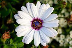 Flower by KonstantinGantsov