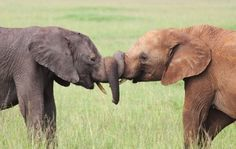@Lauren Jesperson and me if we were elephants haha you can tell they're cousins