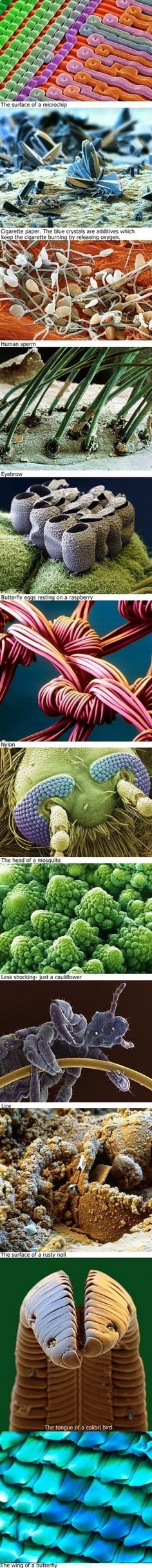 Random items enlarged with an electron microscope.