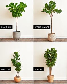 We Ordered a Bunch of Faux Fiddle Leaf Fig Trees & This One is the Best | Apartment Therapy